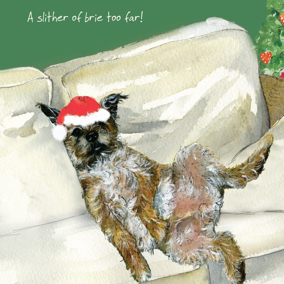 Dog Christmas Card Photo.Border Terrier Christmas Card Brie